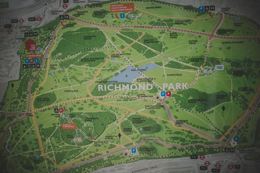 richmond-park-wedding-photography-arni-mark-017